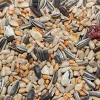Bird seed comes in several varieties