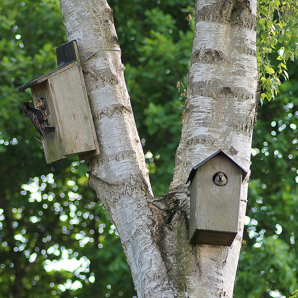 Birds will love it if children/parents put up bird boxes around the garden or on outside walls of buildings